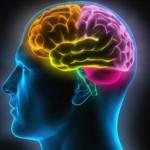 Visual of Man's Brain --- Image by © Matthias Kulka/Corbis